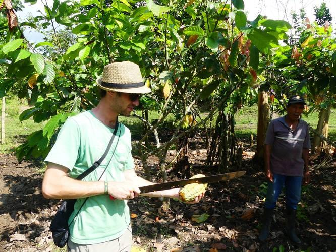 Alexis découpe une cabosse de cacao - Equateur