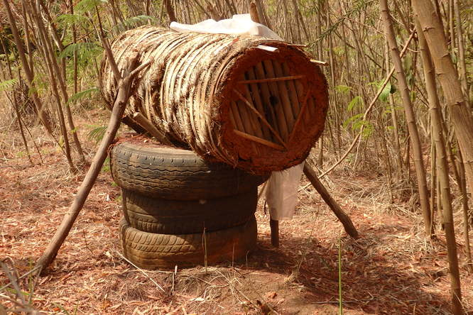 Une ruche Africaine locale