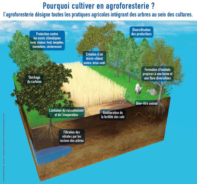 InfographieAgroforest.jpg