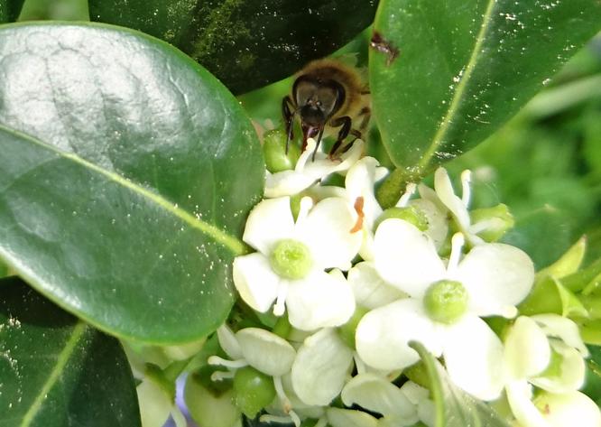 abeillehou.jpg
