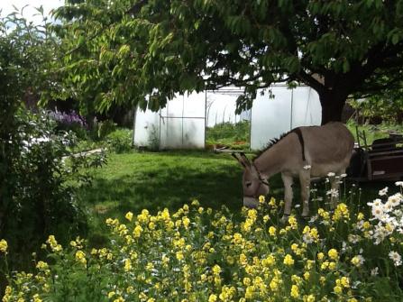 Serre et âne