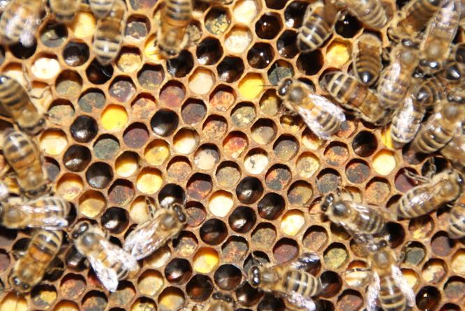 miimosa du bon miel pour la sant des abeilles pour miimosa. Black Bedroom Furniture Sets. Home Design Ideas