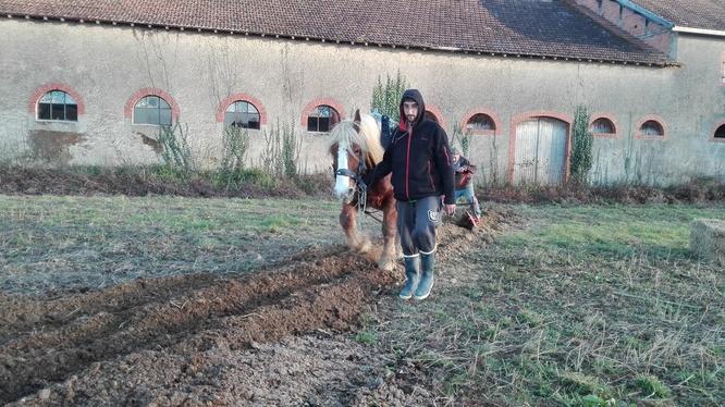 Préparation du sol avant plantation des arbres
