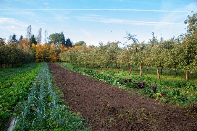 Miimosa plantons un verger pour une coop ration de miimosa - Plantation d un fruitier ...