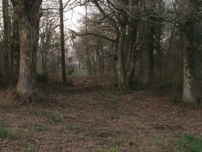 Les bois dans lesquels les poules vont pouvoir s'abriter