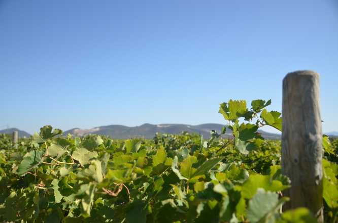 Vignoble Le Dome d'Elyssas