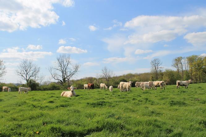 Mise en pâture des vaches 2017