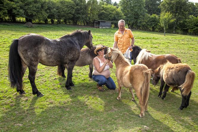 ici mes poney lors d'un shooting photo grossesse