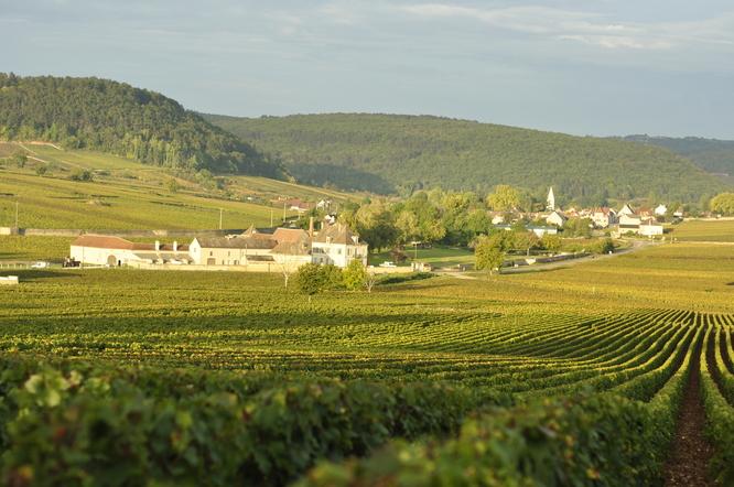 Vignes de Meursault