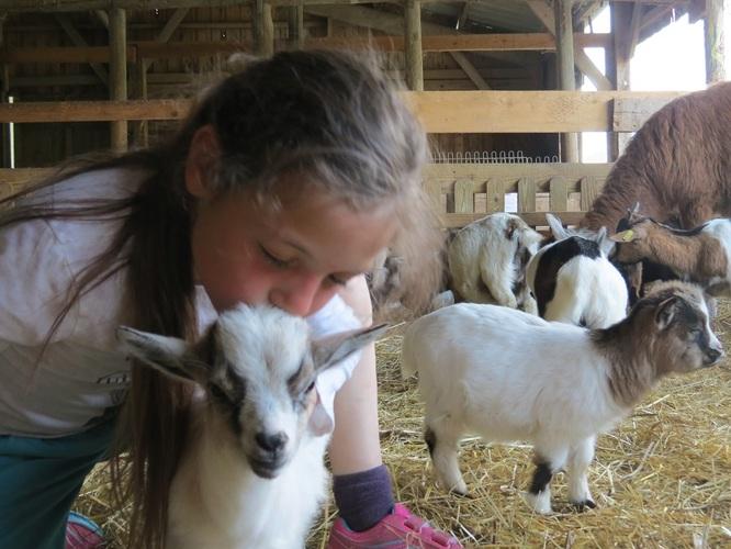 Câlins avec les chèvres naines