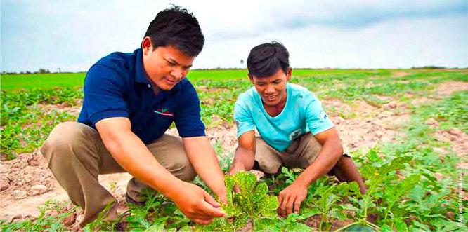 Visite de suivi technique au Cambodge (Agrisud)