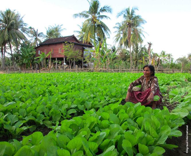 Exploitante au Cambodge