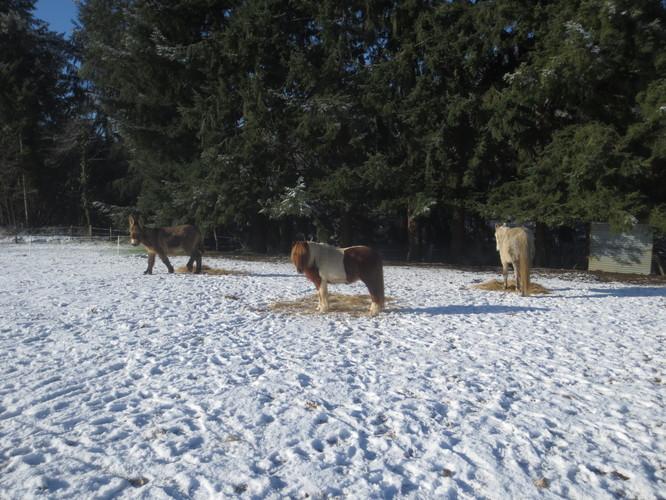 Eskimo, Noisette et Rêveur (l'âne)