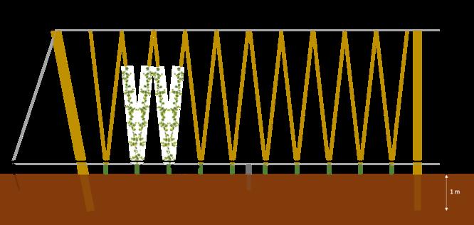 Plan de coupe de la houblonnière