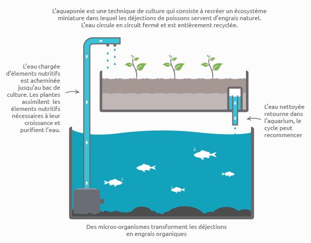 Schéma de principe de l'aquaponie