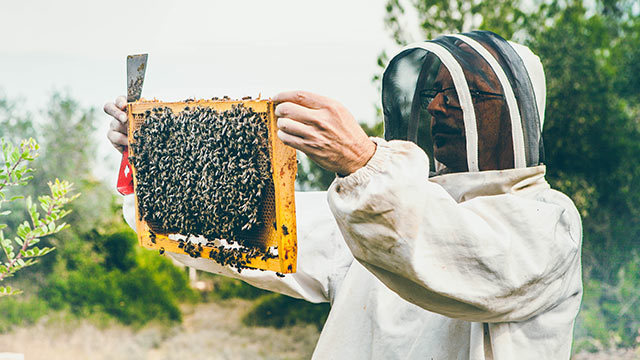 La reine a dit : apiculture !