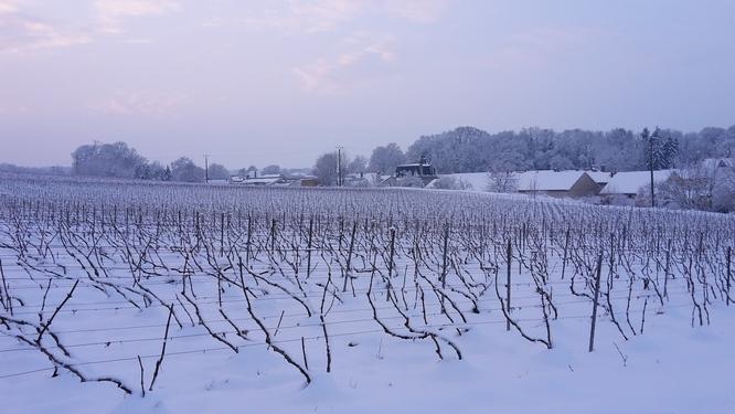 berru sous la neige
