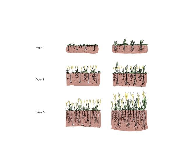Trois passages de la sous-soleuse selon le système keyline permettent de relancer la boucle de fertilité des sols