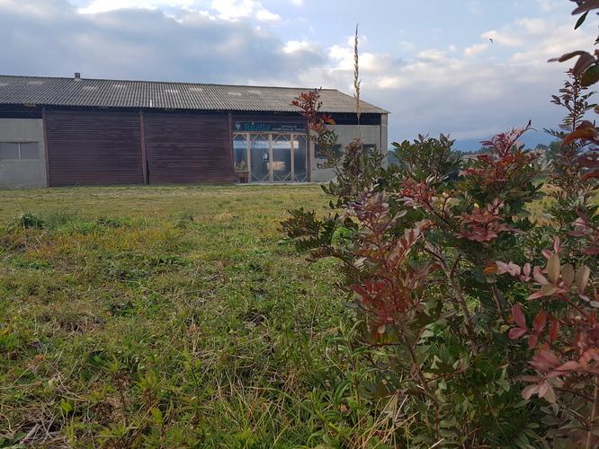 jardin et futur labo Realia
