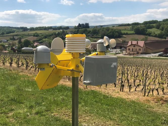 Station météo dans une parcelle de vigne
