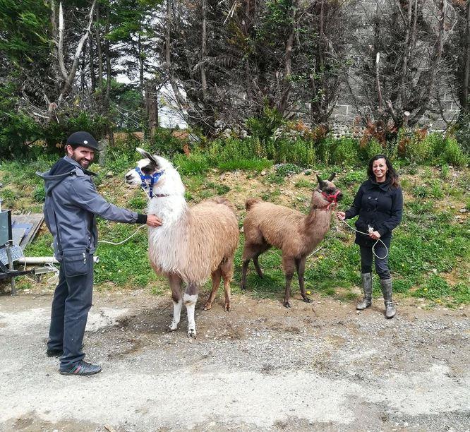 Machu et Pichu en revenant de la foire