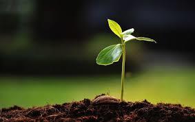 Une image contenant plante, fleur  Description générée automatiquement