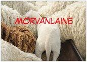 Logo morvanlaine