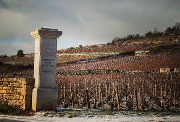 Vignes montrachet