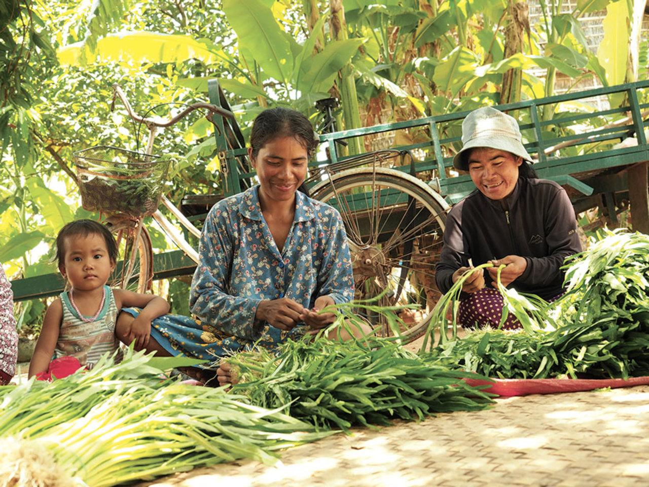 Agriculture familiale agroecologique asie miimosa