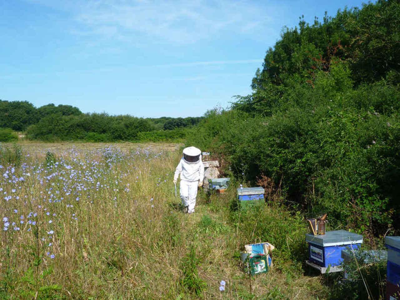 680 ruche geodis france express rochefort 62 2015 07 24 12 44 49