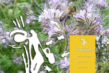 Rucherdemoquebaril mimosa m
