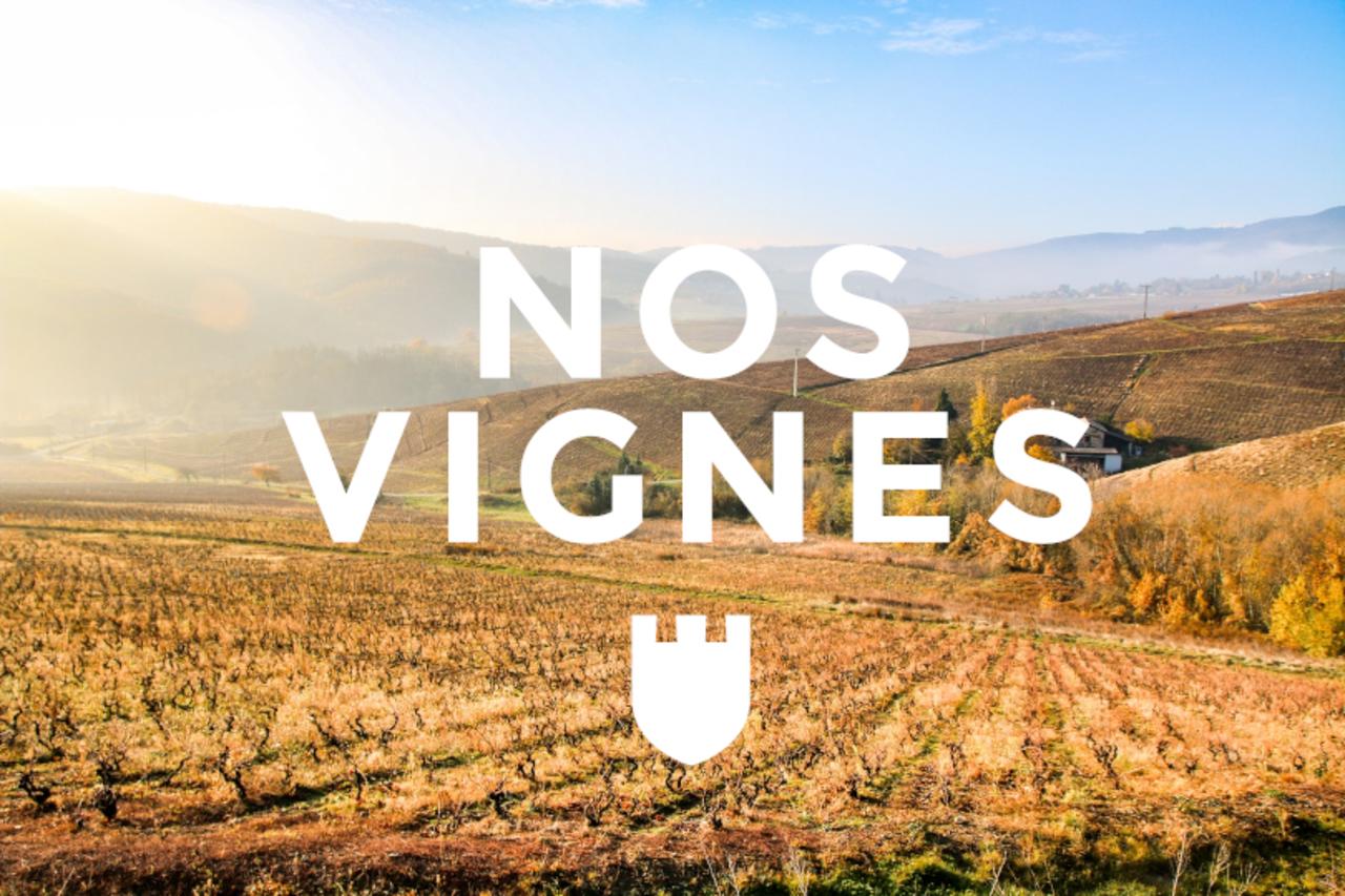 Nos vignes 2.0