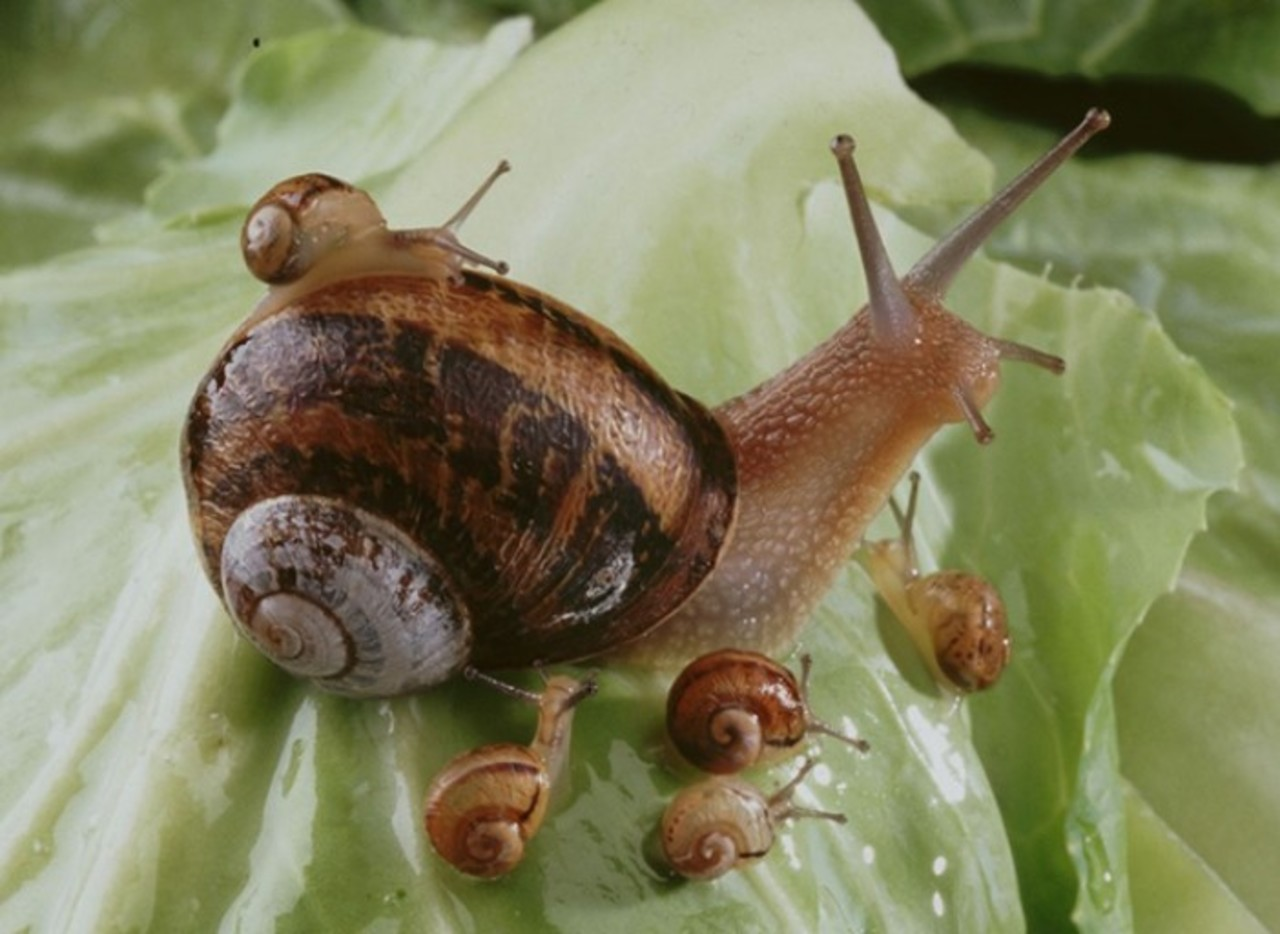 Image escargots