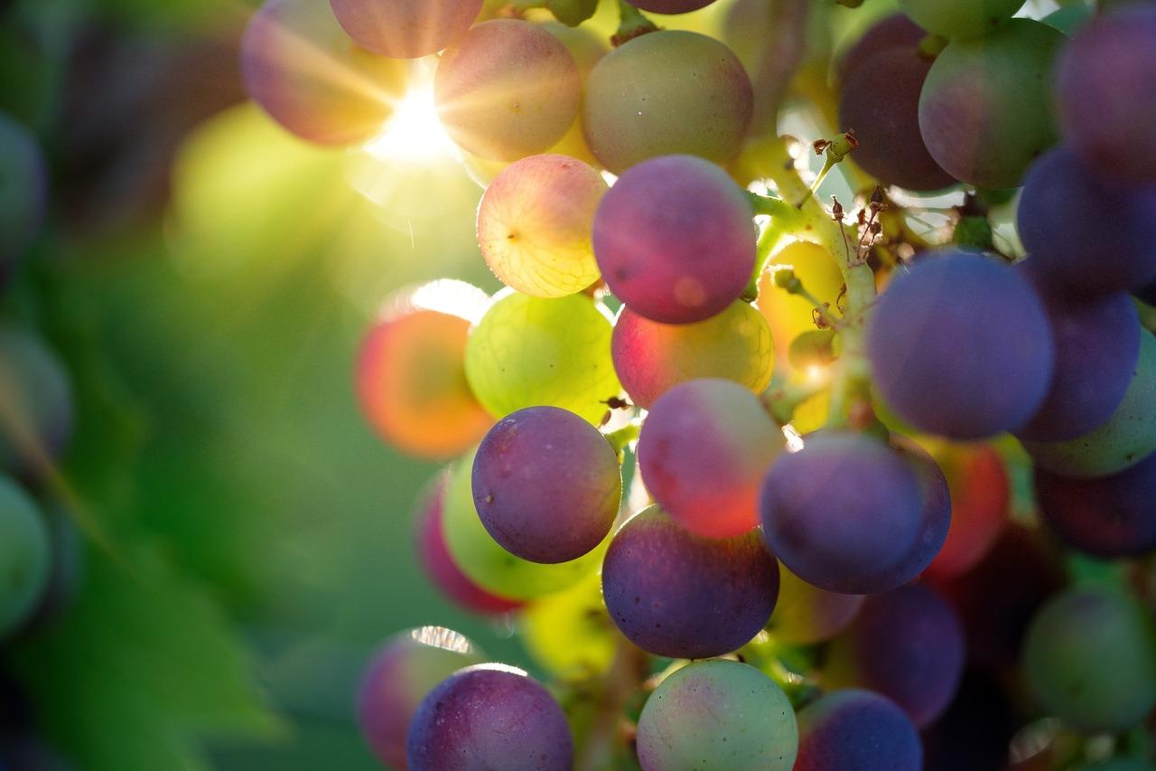 Grapes 3550733 1920