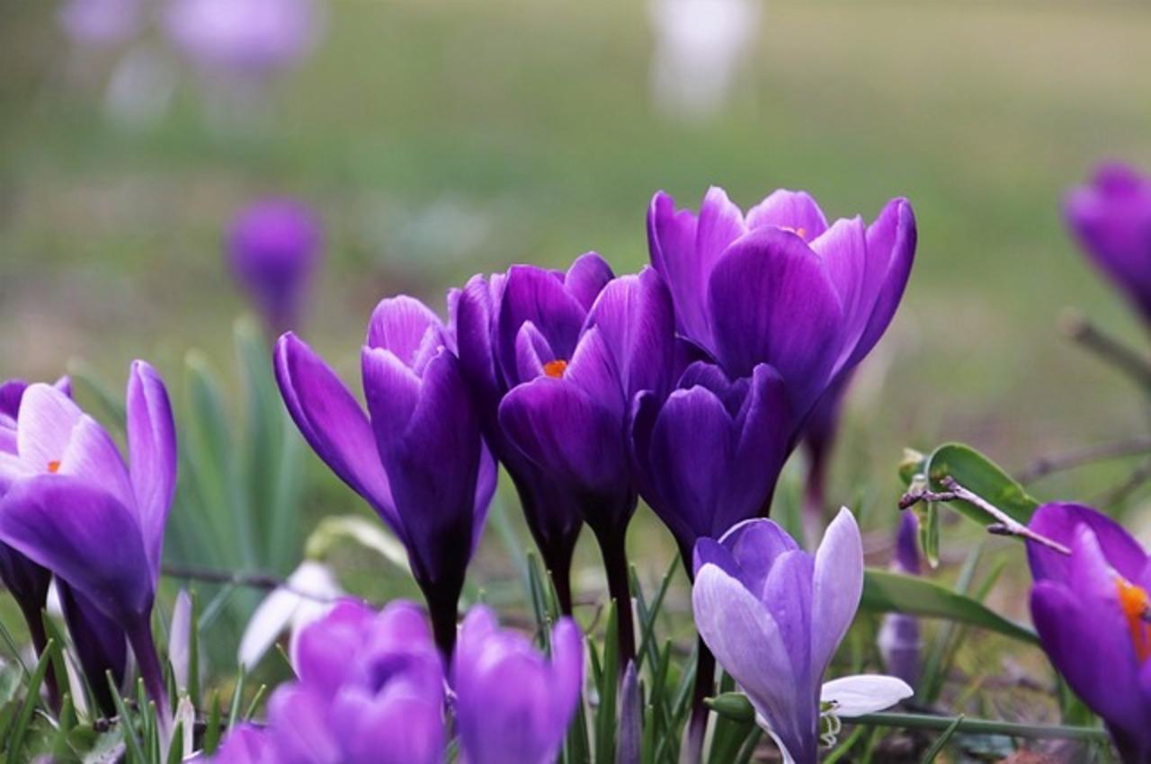 Violet 4032577 640