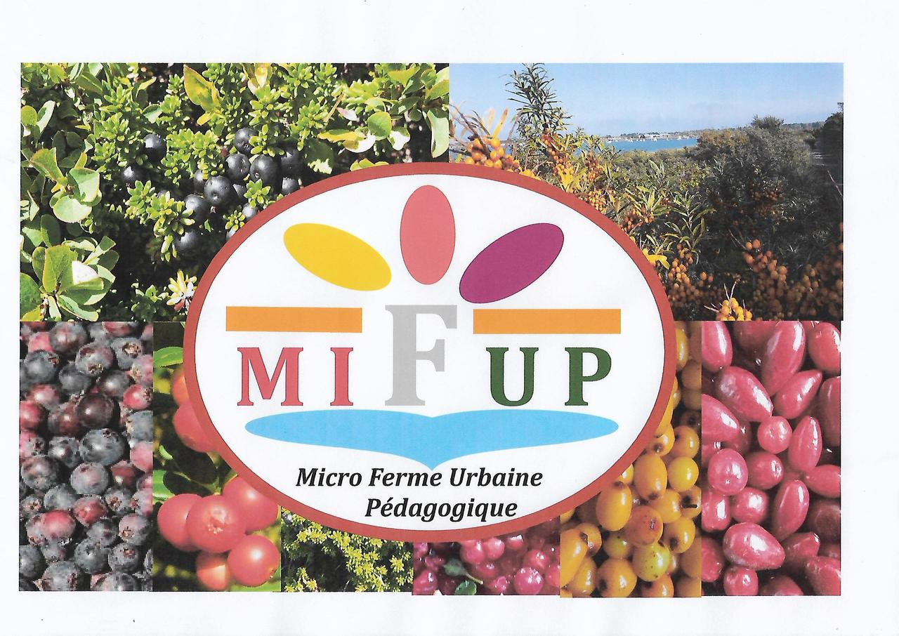 Mifup photo debut facebook 2