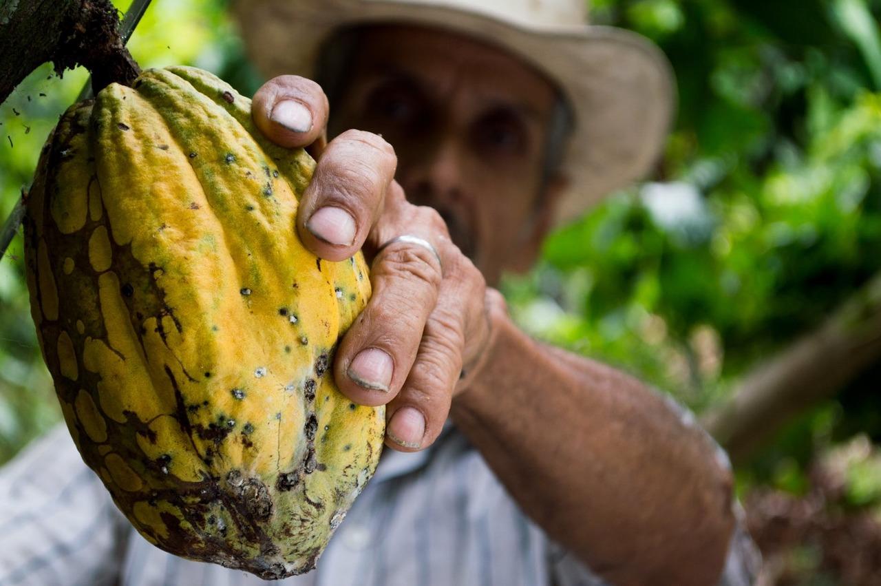 Cocoa man colombia peasant 50707