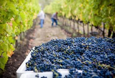 Lasseter winery asg1qsdvb4g unsplash %281%29