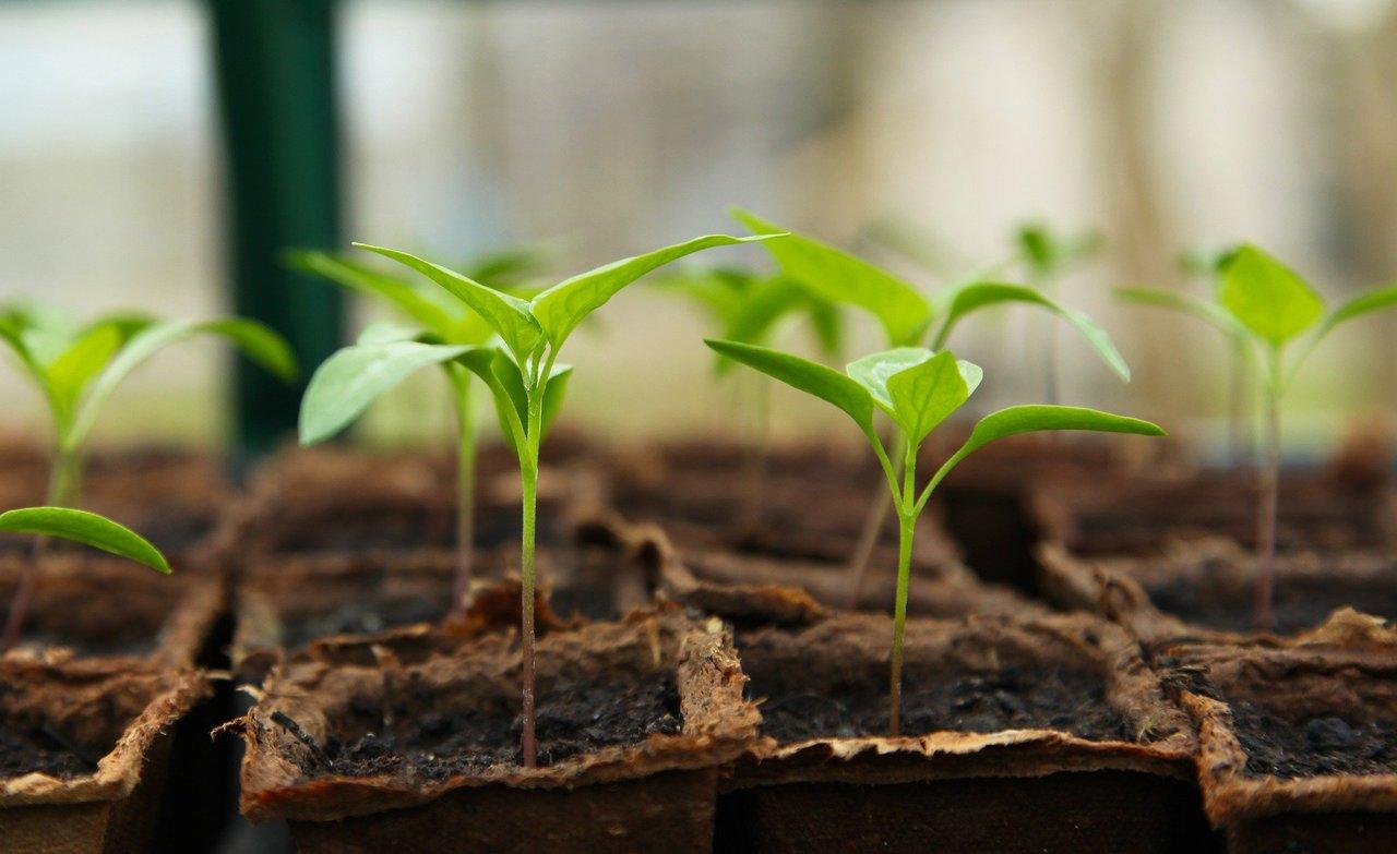 Seedling 5009286 1920