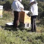 Franck alice abeille